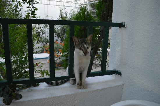 Cimentepe Apart Otel: one of the hotel cats visiting for a snack