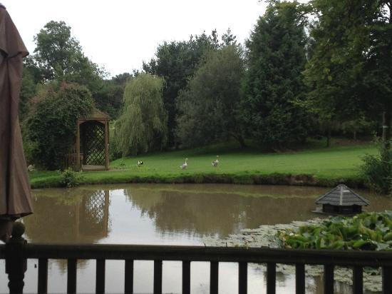 Blackbrook Lodge Caravan & Camp Site: View from the door of the Love Shack