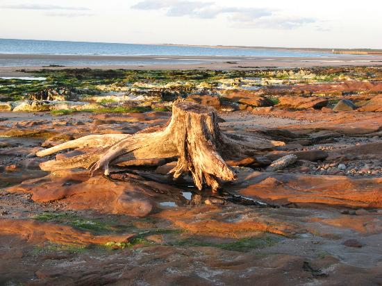 Greenlawns: Driftwood on Nairn beach