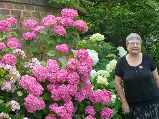 Arley Hall U0026 Gardens: Hydrangea