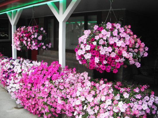Greybull Motel: More Flowers
