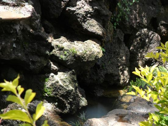 Comfort Gardens Guest House: In the garden
