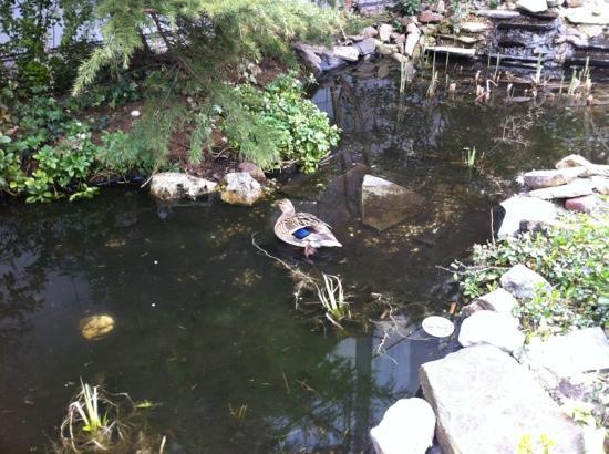 West Side Inn Hotel: los patos del jardín