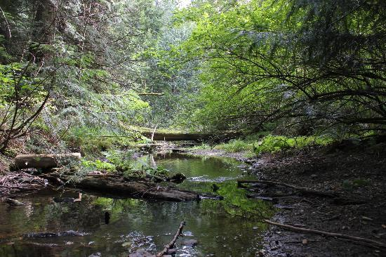 On the Sea B&B: A creek just off the Killarney lake hiking trails