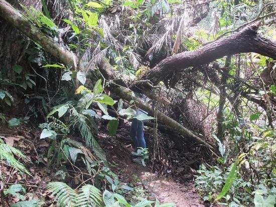 Cameron Highlands Trail No. 3 : Dans la jungle