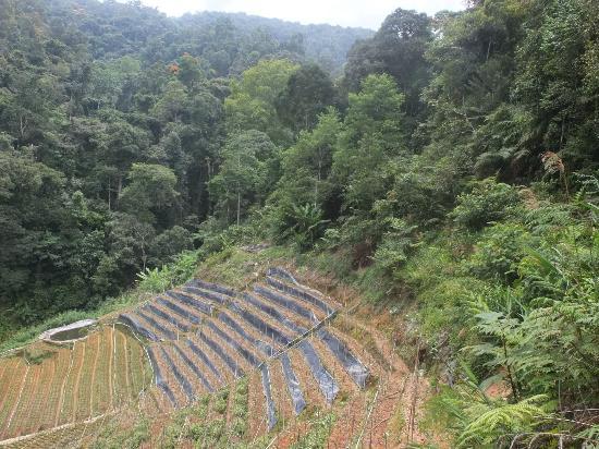 Cameron Highlands Trail No. 3 : Sortie de jungle mais pas fin de trail !!