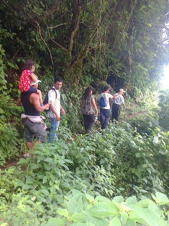 On our way down through the coffee plantation