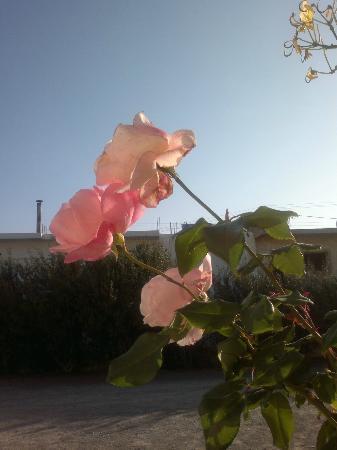 Villa Marina Apartments: flowerfull surrounding where ever you look (depends on season)