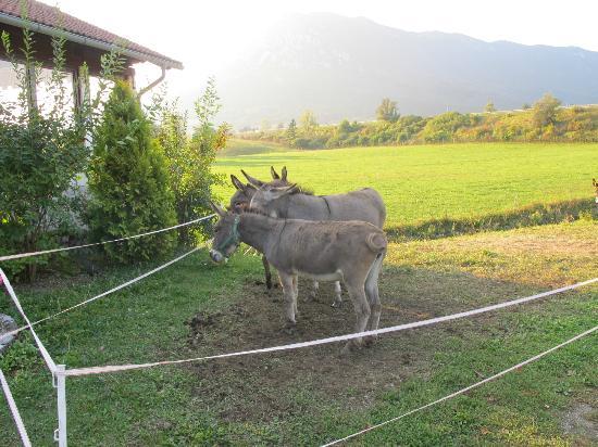 Hudicevec Tourist Farm: Donkeys right outside :)
