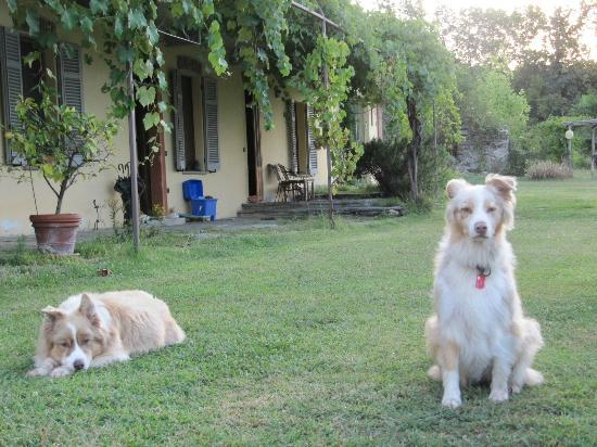 Cascina Incocco : The dogs