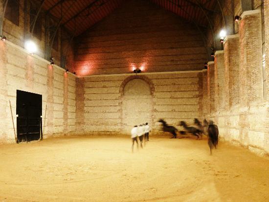 Espectáculo Ecuestre Pasión y Duende del Caballo Andaluz: Espectáculo
