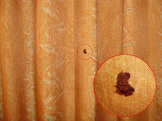 DoubleTree by Hilton San Jose: Brown something one curtain