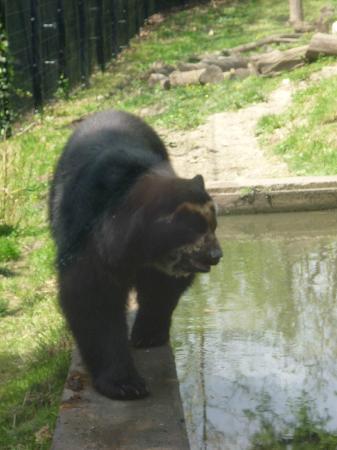 Parc zoologique de Maubeuge : Ours