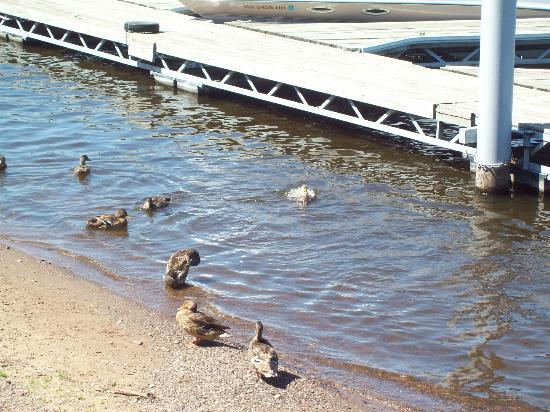 Slippery's Tavern and Restaurant : Ducks near the outdoor porch