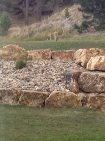 Holiday Inn Express Custer: Ask for a room facing the nice backyard view.