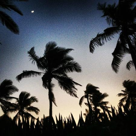 Beach House Kilifi: Night sky - palms and half moon