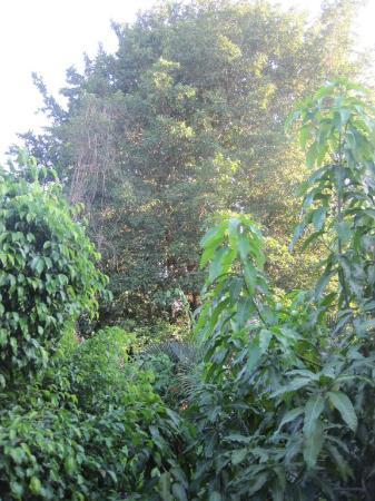 Casa Quetzal: beautiful greens outside