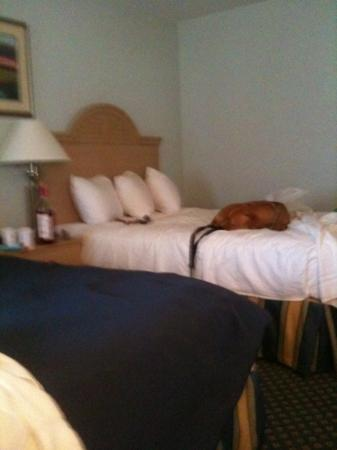 Baymont Inn & Suites Manitowoc Lakefront: Vinny loved the bed! haha