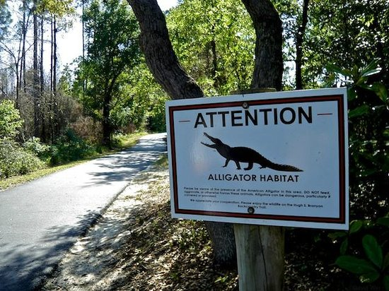 Hugh S. Branyon Backcountry Trail: You might even encounter an alligator