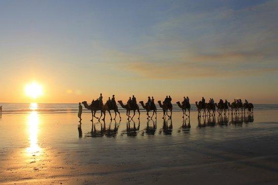 Ships of the Desert: Sunset Camel Train