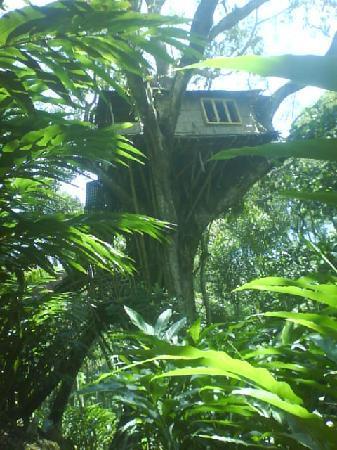Shola Periyar Tree House: Shola Tree House