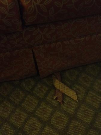 Holiday Inn Express Lompoc: Sofa bed with a rip on it