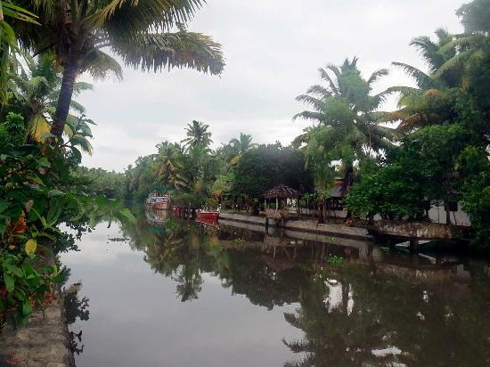 Coir Village Lake Resort : view from the room