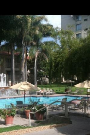 Sheraton San Jose Hotel: pool