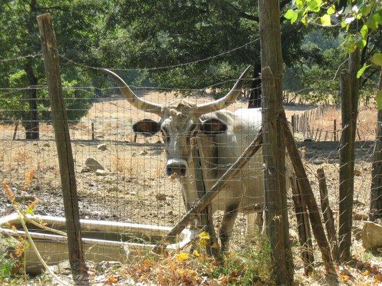 Agriturismo Capra Matilda: I veri animali