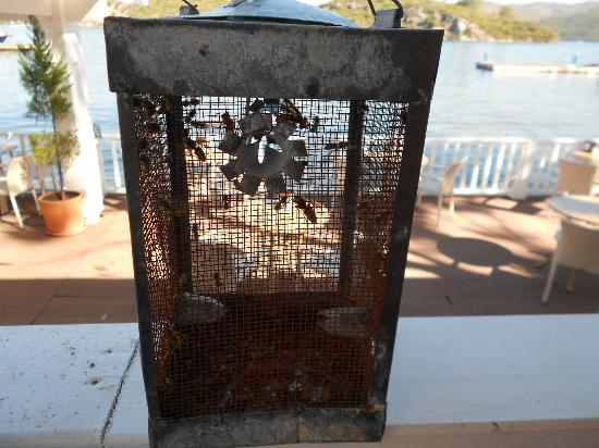 Club Adakoy Resort Hotel: Wasp trap