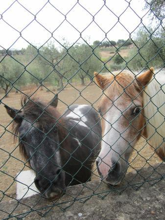 Agriturismo Poggio degli Ulivi: I due Pony