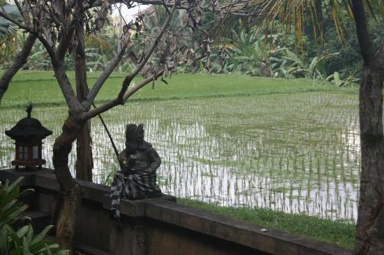 Jati Home Stay: View from the room
