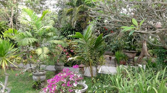 Puri Kelapa Garden Cottages: Tropical garden