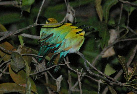 Kakadu Culture Camp : oiseaux sortie nocture