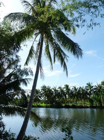 Cua Dai Beach: Road from Hoi An to Cua Dai