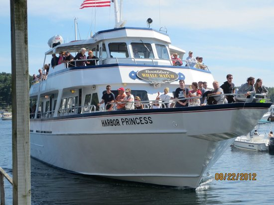 Cap'n Fish's Whale Watch: Harbor Princess