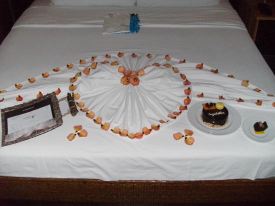 비반타 바이 타지 코랄 리프 몰디브 사진