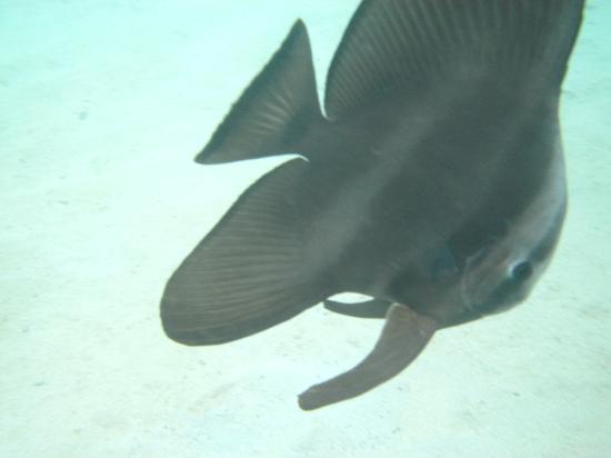 Vivanta by Taj Coral Reef Maldives: Unser persöhlicher Freund