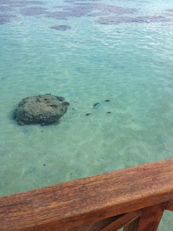 Vivanta by Taj Coral Reef Maldives: Unser Hausriff