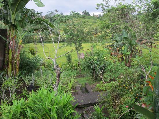 Surya Shanti Villa : Grounds