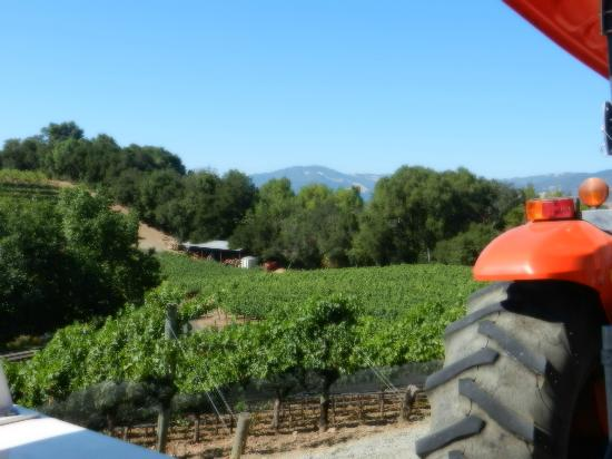 Sonoma Valley: Tram tour