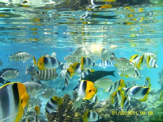Fare Pea Iti: Escursione giardino dei coralli