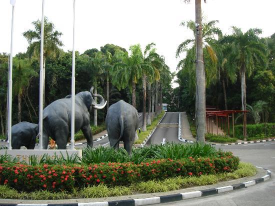 Nirwana Gardens - Nirwana Resort Hotel: Drive into hotel