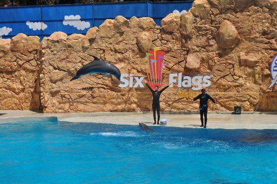 Six Flags Mexico : Show de delfines.