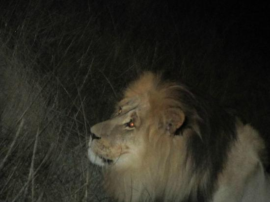 Gondwana Game Reserve: Night drive - look who we found!