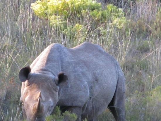 Gondwana Game Reserve: Rino