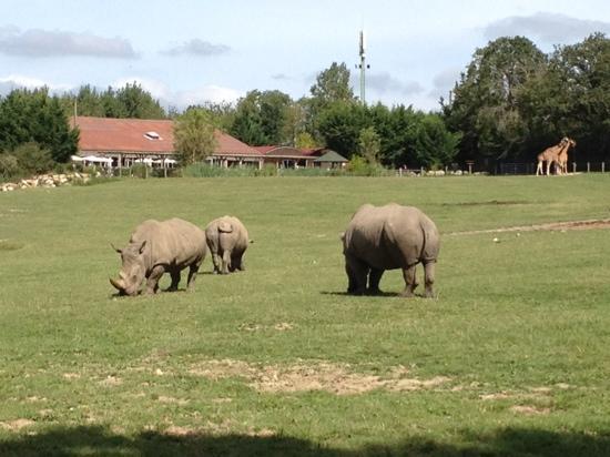 Hermival-les-Vaux, France: les rhinocéros blancs