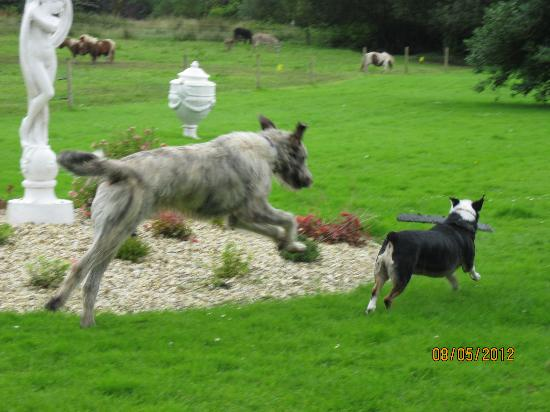 Ballyseede Castle : Higgins & Einstein at play
