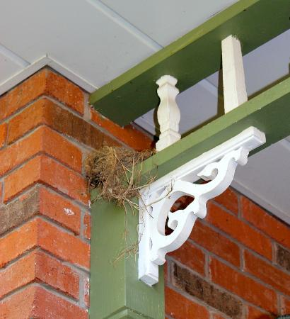 Britaly Bed and Breakfast: Bird nest