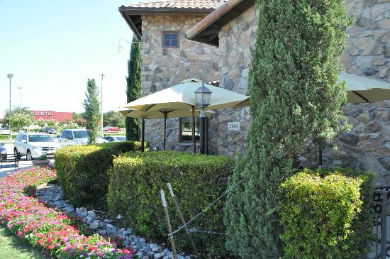 Olive Garden, Frisco - Menu, Prices & Restaurant Reviews - TripAdvisor